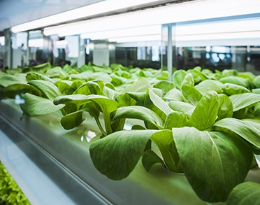 horticultural grow facility